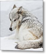 Laying Out In A Winter Storm II Metal Print