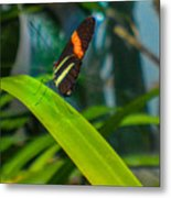 Lazy Butterfly Metal Print