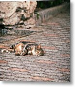 Lazy Cat    Metal Print