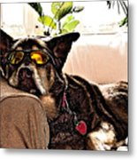 Lazy Dog Metal Print