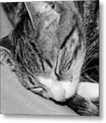 Lea Sleepy Cat Metal Print