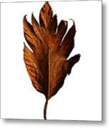 Leaf 0787 Metal Print