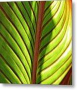 Leaf Abstract  23 Metal Print