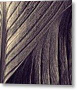 Leaf Abstract  24  Sepia   Metal Print
