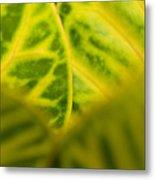 Leaf Abstract Metal Print