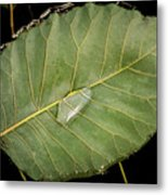 Leaf And Water Metal Print