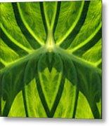Leaf Metal Print
