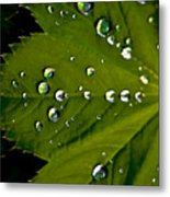 Leaf Covered In Raindrops Metal Print