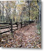 Leaf Covered Trail Metal Print