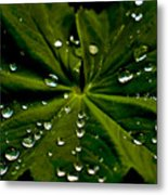 Leaf Covered With Water Droplets Metal Print