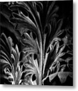 Leaf Detail 2 Black And White Metal Print