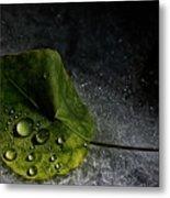Leaf Droplets Metal Print