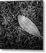 Leaf In Phlox Nature Photograph Metal Print