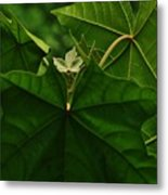 Leaf In The Middle Metal Print