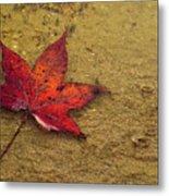 Leaf In The Rain Nature Photograph Metal Print