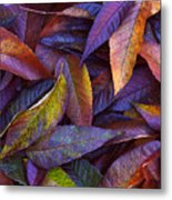 Leaf Ink Photo Designs  Metal Print