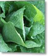 Leaf Lettuce Part 4 Metal Print
