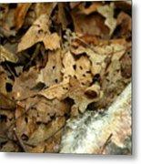 Leaf Litter Metal Print