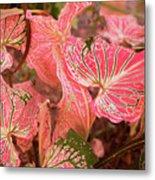 Leaf Of Color Metal Print