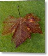 Leaf On Algae Metal Print