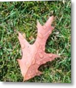 Leaf Resisting The Rain Metal Print