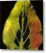 Leaf Still Life Metal Print