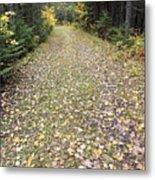 Leaf-strewn Trail Metal Print
