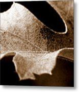 Leaf Study In Sepia Metal Print