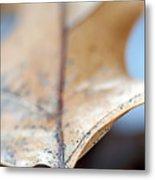 Leaf Study Vii Metal Print