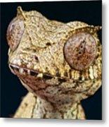 Leaf-tailed Gecko Metal Print