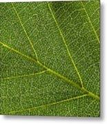 Leaf Textures Metal Print