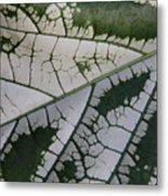 Leaf Variegated 1 Metal Print