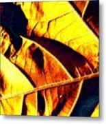 Leaf Veins Abstract Metal Print