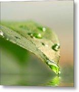 Leaf With Water Droplets Metal Print