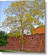 Leafing Out Metal Print