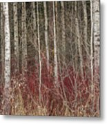 Leafless Color Metal Print