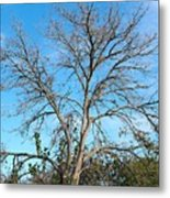 Leafless In Autumn Metal Print