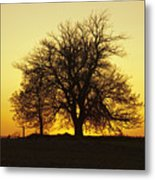 Leafless Tree Against Sunset Sky Metal Print