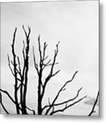 Leafless Tree Metal Print