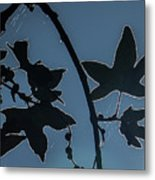 Leafs Backlit Metal Print