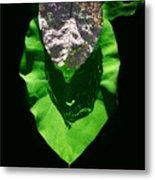 Leaf.three Layers Metal Print