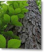 Leafy Ladder Metal Print