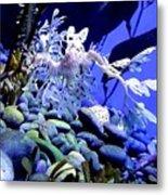 Leafy Sea Dragon Metal Print by Kelly Mills