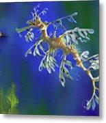 Leafy Sea Dragon Metal Print by Thanh Thuy Nguyen