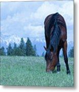 Leaning Horse Metal Print