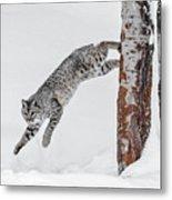 Leapin Bobcat Metal Print