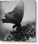 Learn To Fly 001 Metal Print
