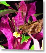 Least Skipper Butterfly Metal Print