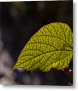 Leav Venation Metal Print