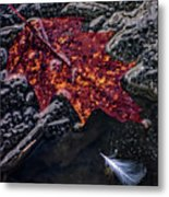 Leave Frozen In Time Metal Print